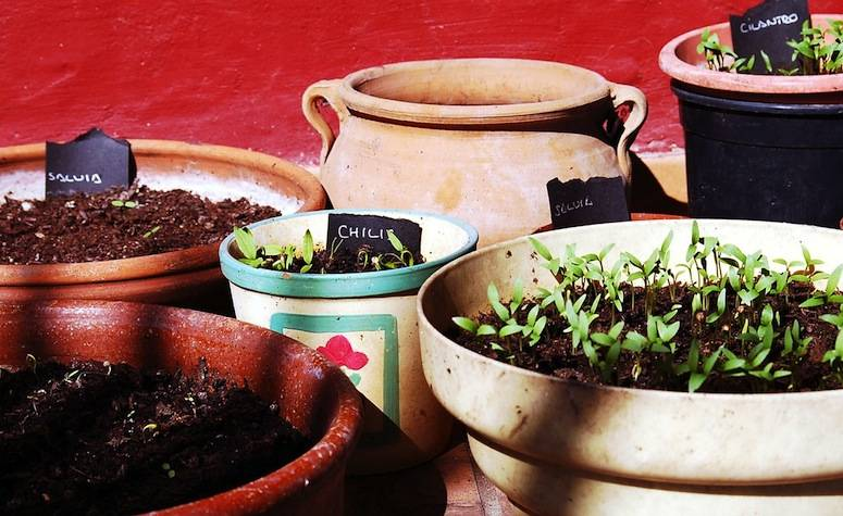 Gardeners-therapy-gardening-tips-plant-pots-somerset-toiletry-company