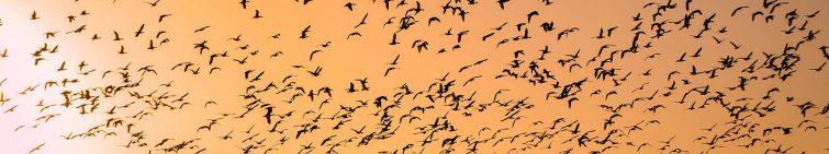 a-guide-to-cruelty-free-toiletries-birds-sky